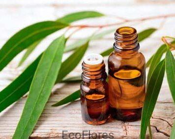 olejek eukaliptusowy